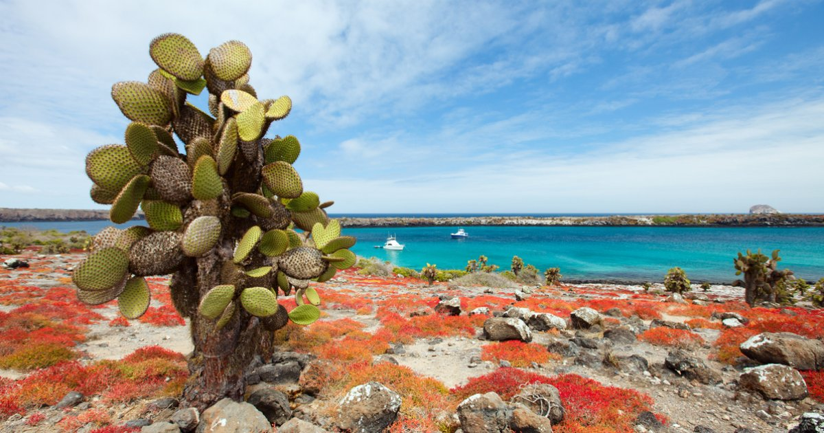 the galapagos islands According to the galapagos conservancy, about 80 percent of the islands' land birds, 97 percent of the reptiles and land mammals, and at least 20 percent of the marine species are endemic to the.