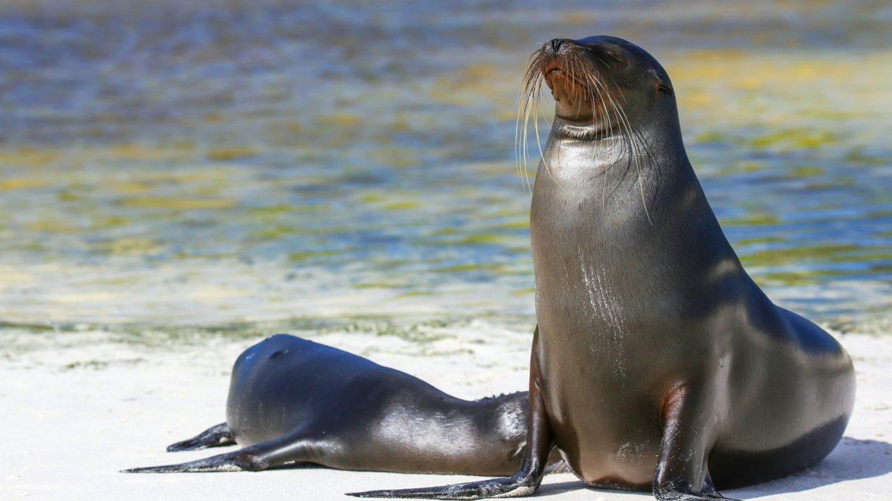 Wildlife viewed during Galapagos cruise