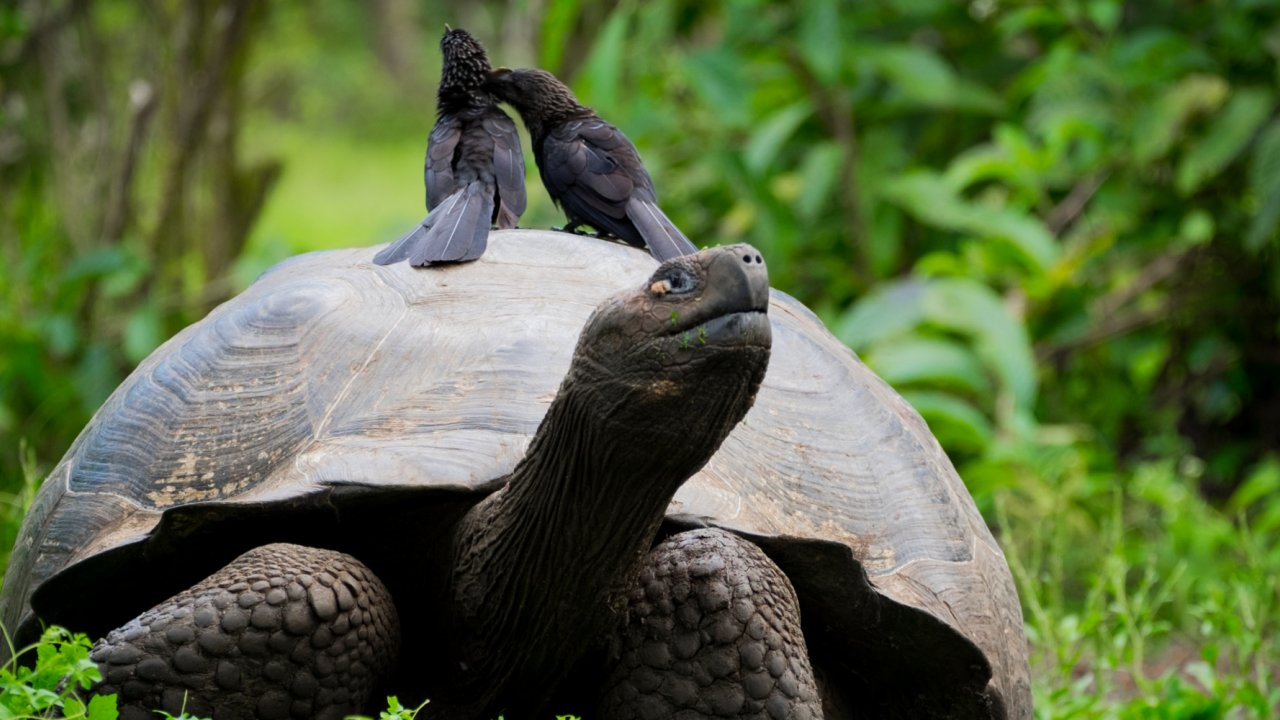 Holiday in the Galapagos