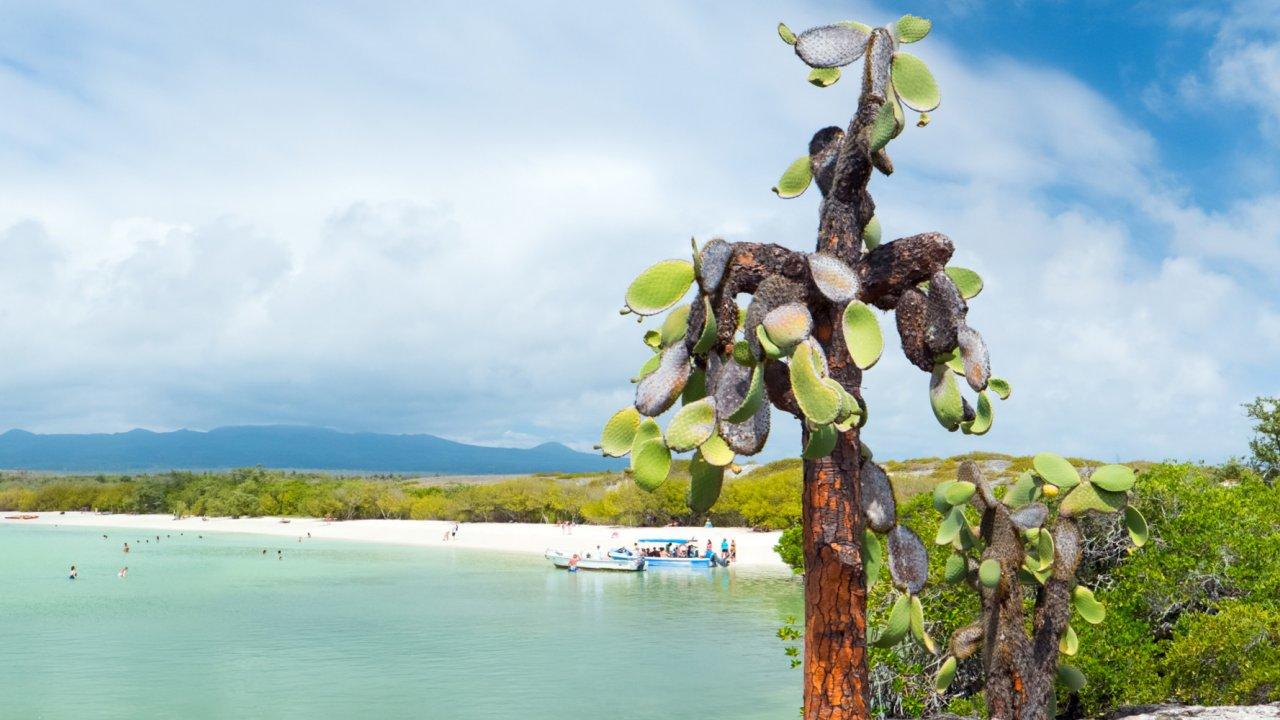 Catamaran Cruise Galapagos Islands