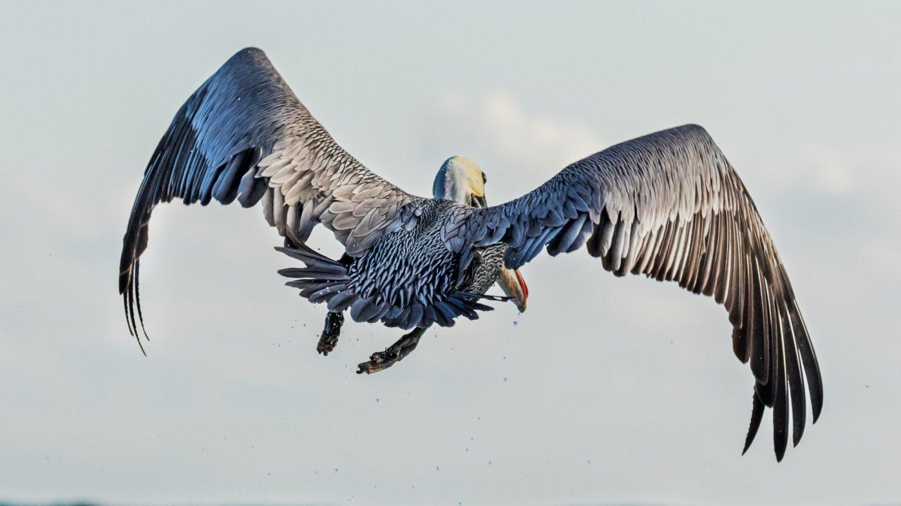 birds in the Galapagos