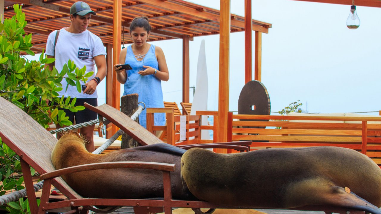 sea lions on lounge chairs galapagos