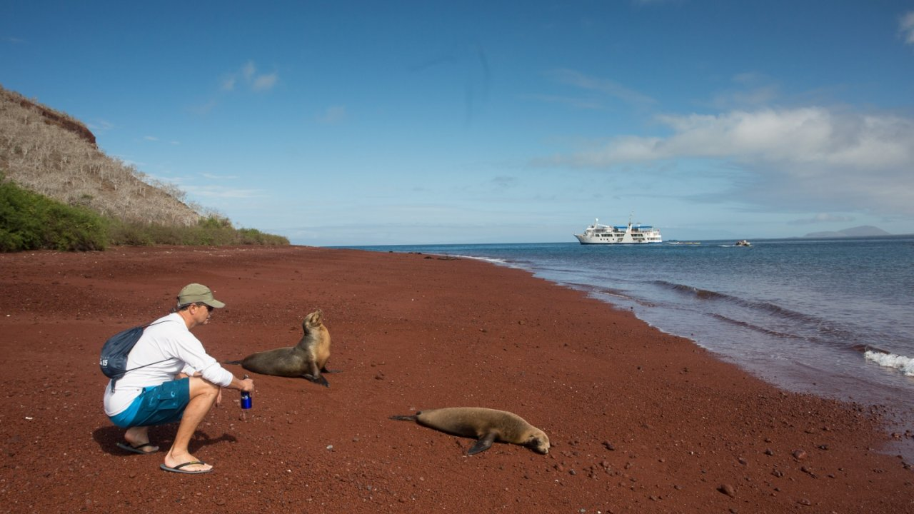 man observing sea lions