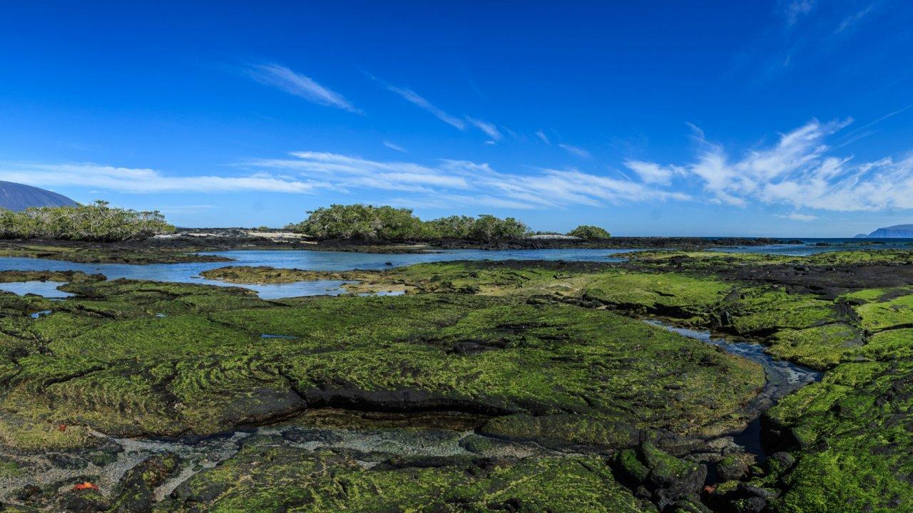 flora galapagos islands