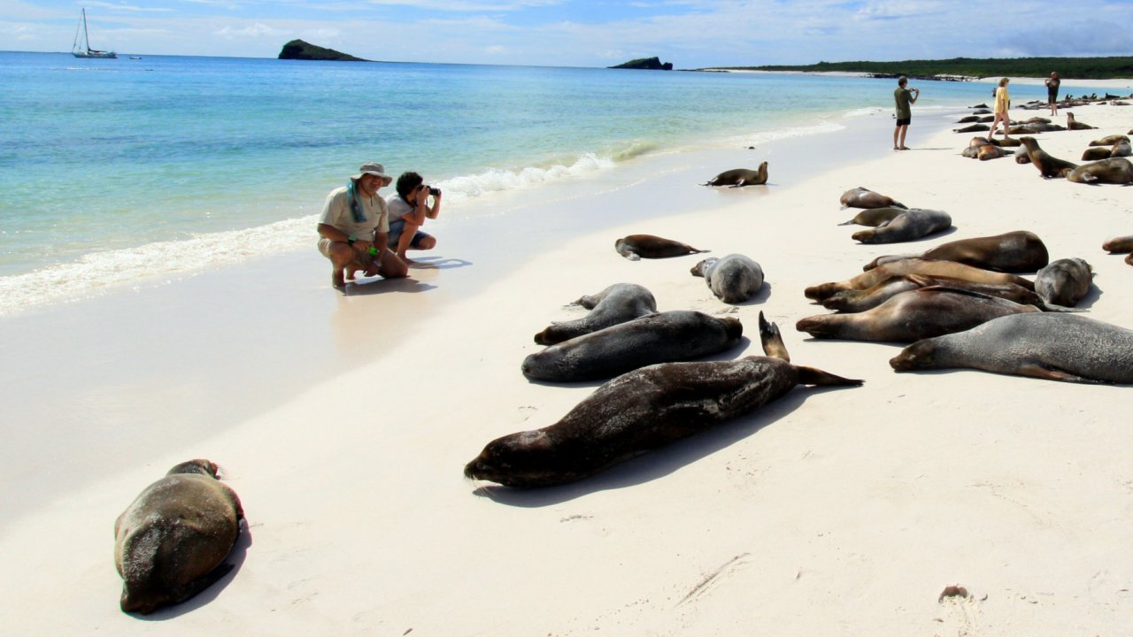 Sea lions on beach in Galapagos