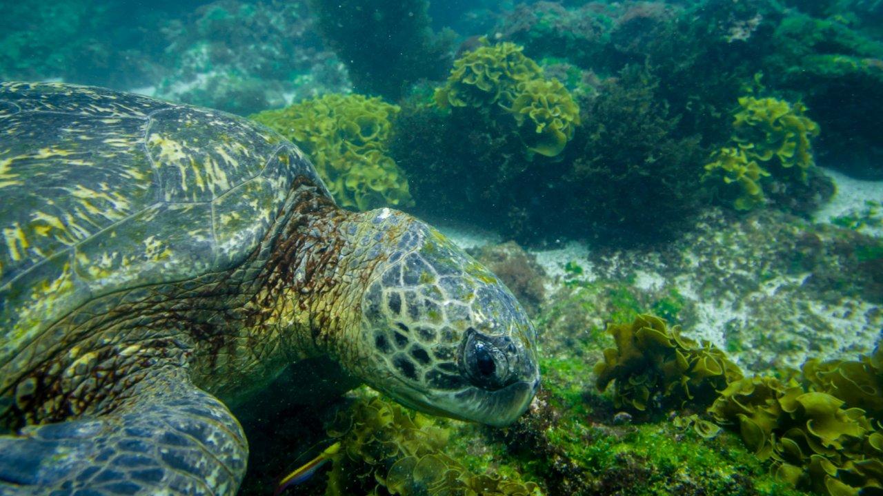 Snorkeling during Galapagos cruise
