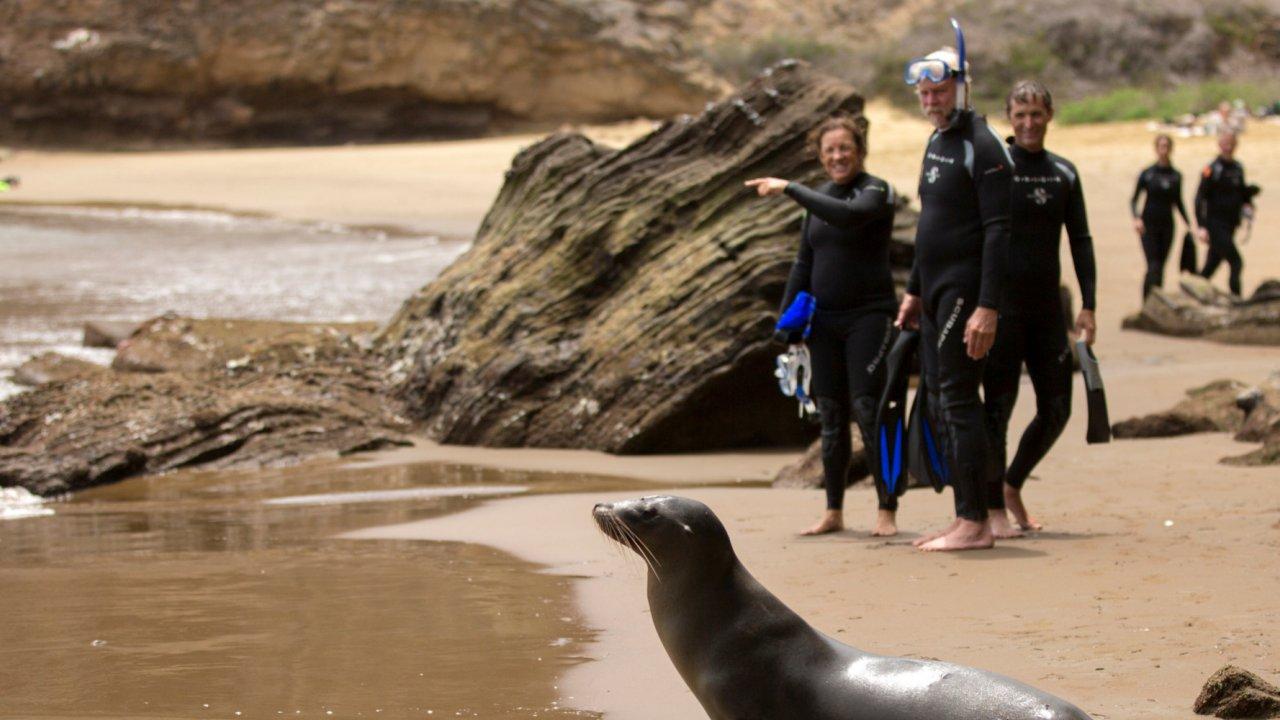 viewing wildlife Galapagos islands