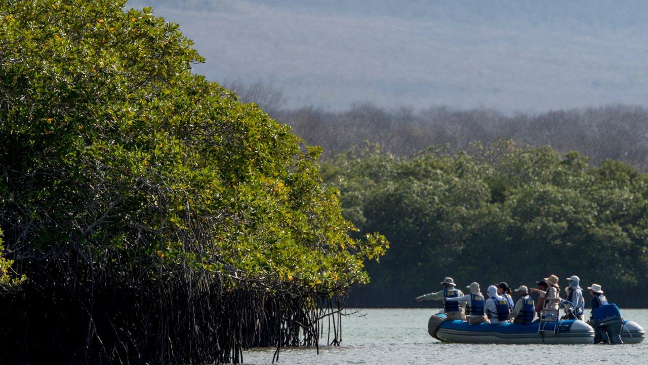 Galapagos Mangroves