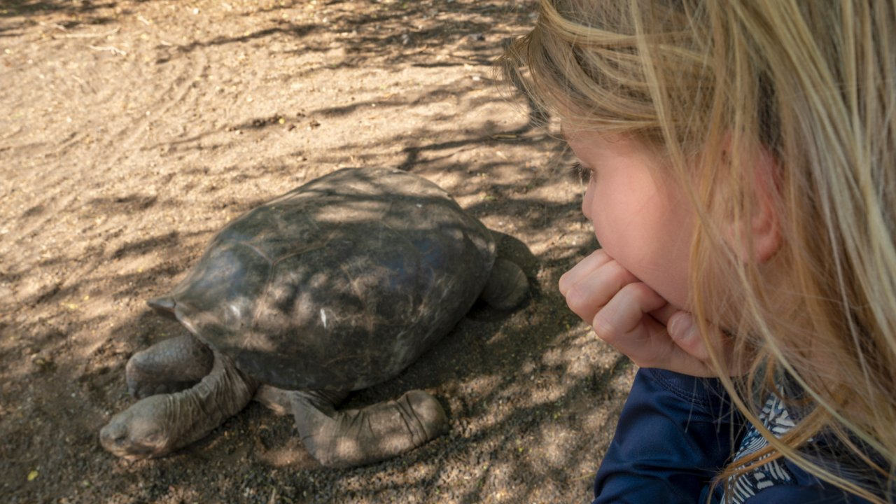 girl looking at Tortoise in galapagos
