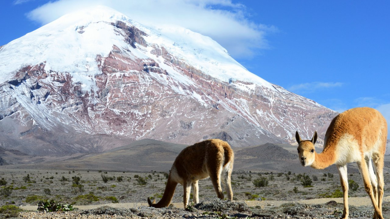 cotopaxi single personals About new years eve ecuador adventure 2018-19  singles travel international does not guarantee the number of guests,  (18,725 ft), and cotopaxi.