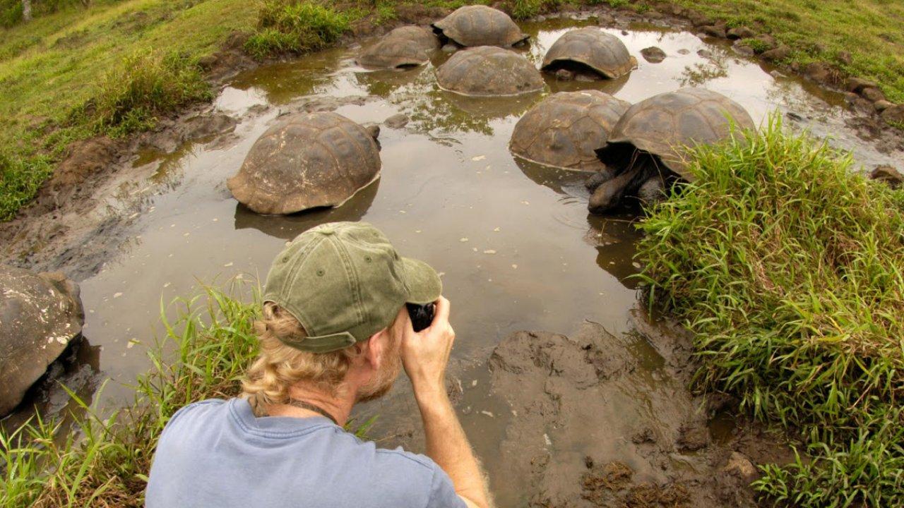 tip top ii - land tortoise giant family