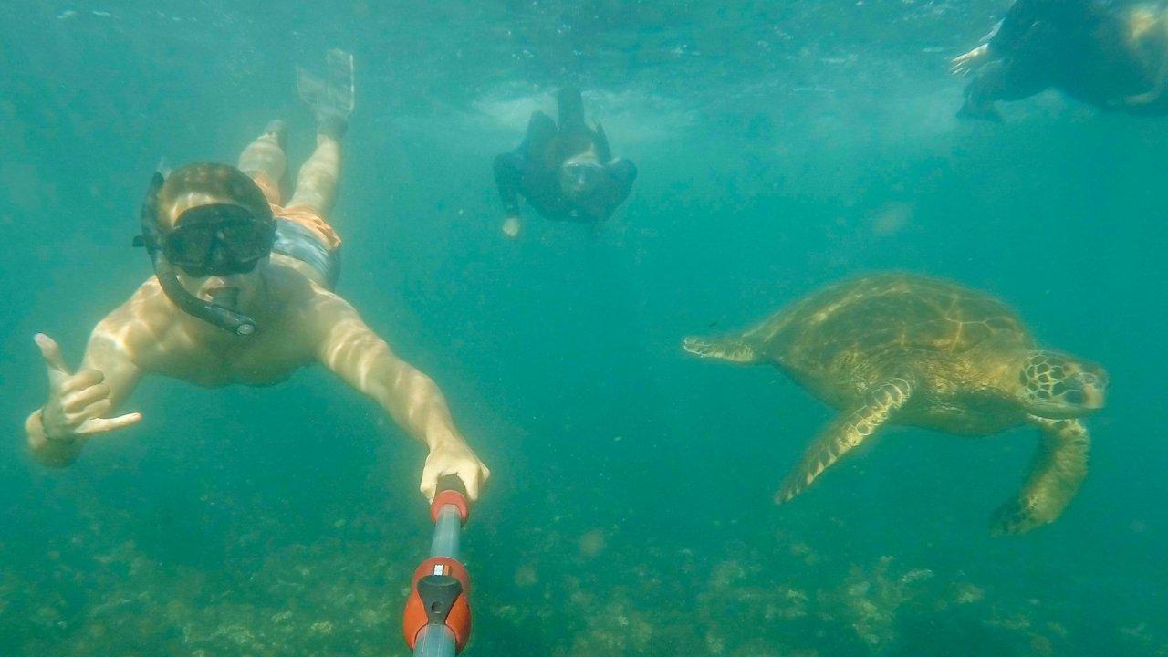 tip top ii - snorkeling with sea turtles