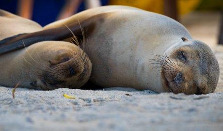 Galapagos Christmas 2020 Galapagos Christmas Vacation | Christmas Tours, Adventures