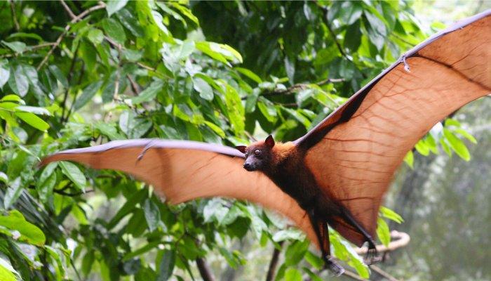 ECUADOR'S BATS