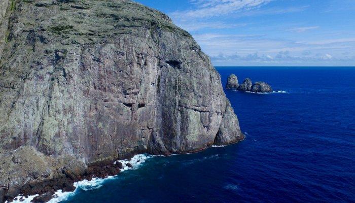 Sei Whale Galapagos
