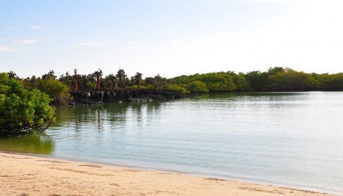 Galápagos Tortuga Bay